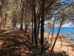 Sardinia Forest by the Sea